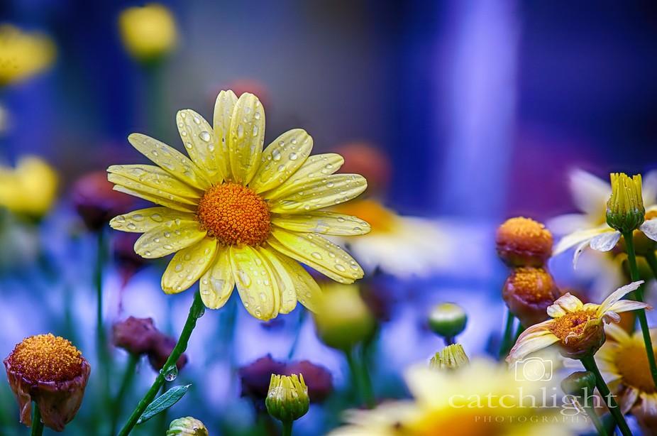 Flower garden macro