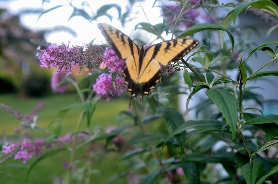 DSC_1485_6flowers butterfly