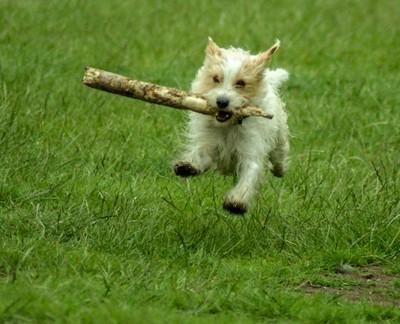 happy jumping dog