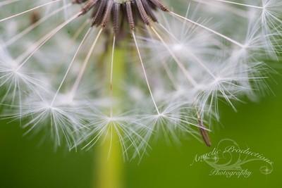 macro-flowers_0069-copy