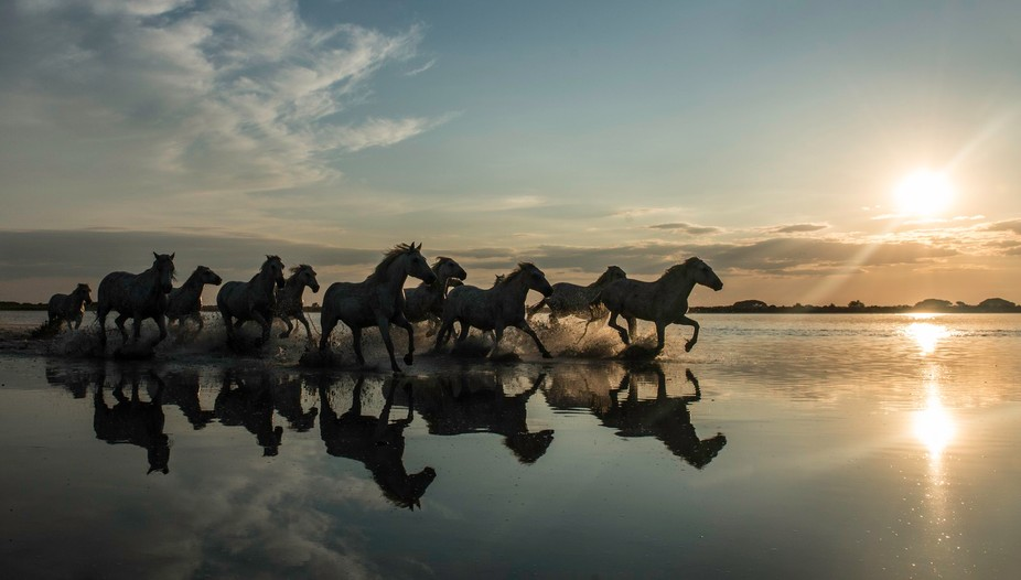 Wild Horses of La Camargue, running against a sunset. Using shutter speed priority at 1/1000th an...