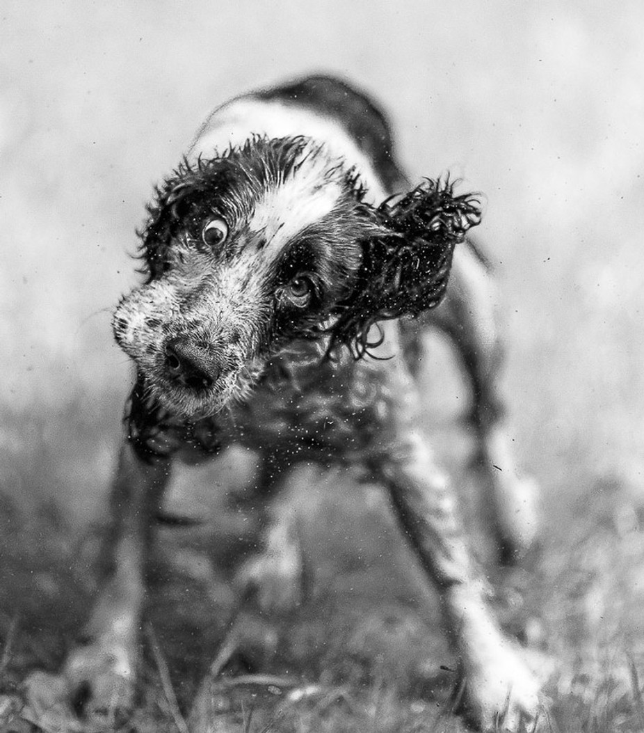 Shake it! by Cbries - Animals In Black And White Photo Contest