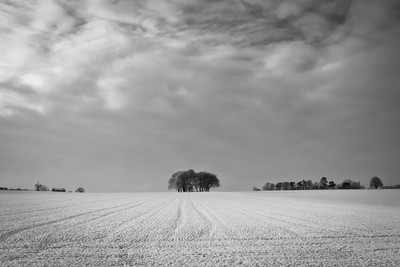 Redworth Winter Fields.