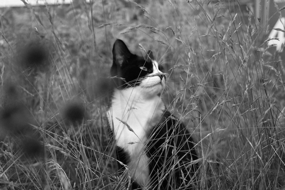 My cat Gizmo sat in the grass