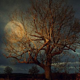 Took many shots of this beautiful old Oak on my walk with the dog, but never looked as good as I wanted, so I added a moon I had taken earlier to...