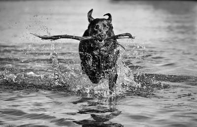 Bob Splashing