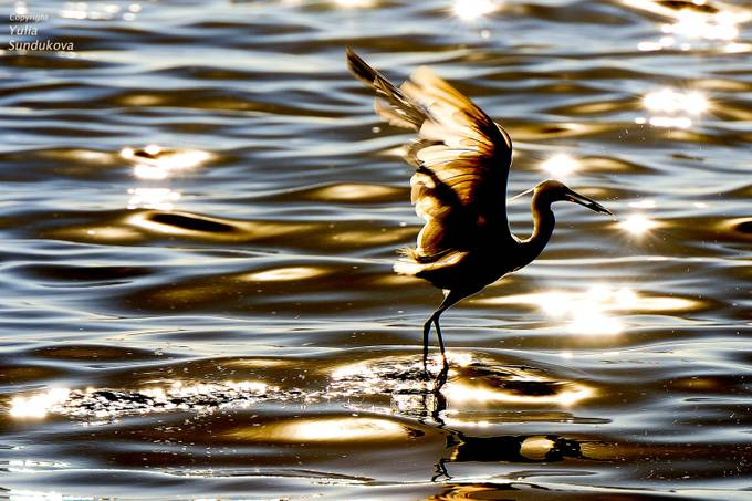 Light and wings and fish by Julia-Moon - Light On Water Photo Contest