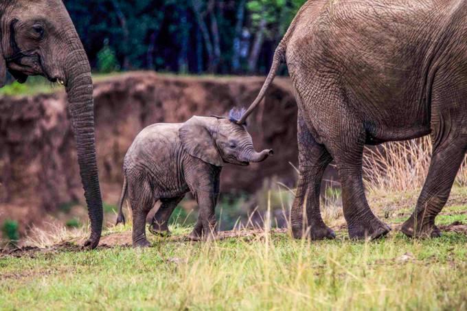 elefamily by sanjeevcal - Baby Animals Photo Contest