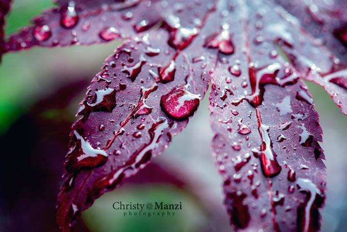 Raindrops by ChristyManziPhotography - Macro Water Drops Photo Contest
