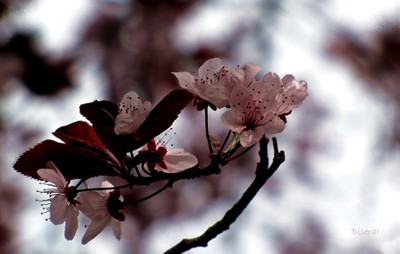 Flowers of gratitude