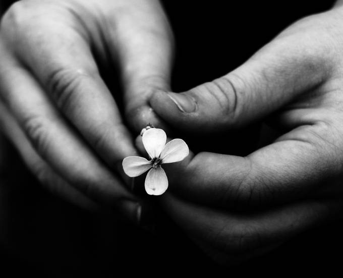 A Flower for Mummy by SteeleBirdie - Shooting Hands Photo Contest