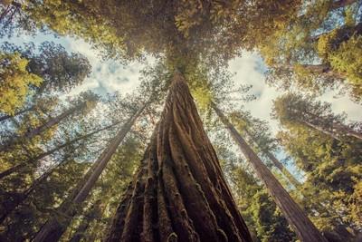 Tree Trunks Photo Contest Winners