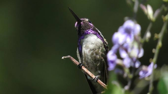 Awesome Hummingbird by scottbayless