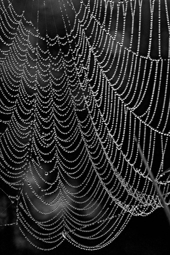 Crystal Web by MotherNature - Textures In Black And White Photo Contest