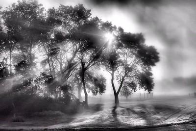 Sun through trees and fog