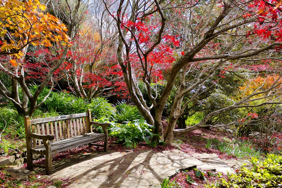 The vibrant colours of autumn at Mt Wilson are something to see even if for a short while.