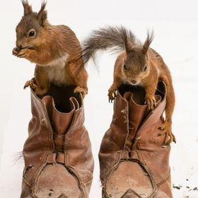 red squirrel on shoes