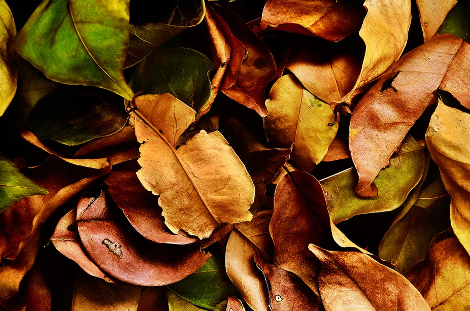 Dead leaves scattered in the yard.