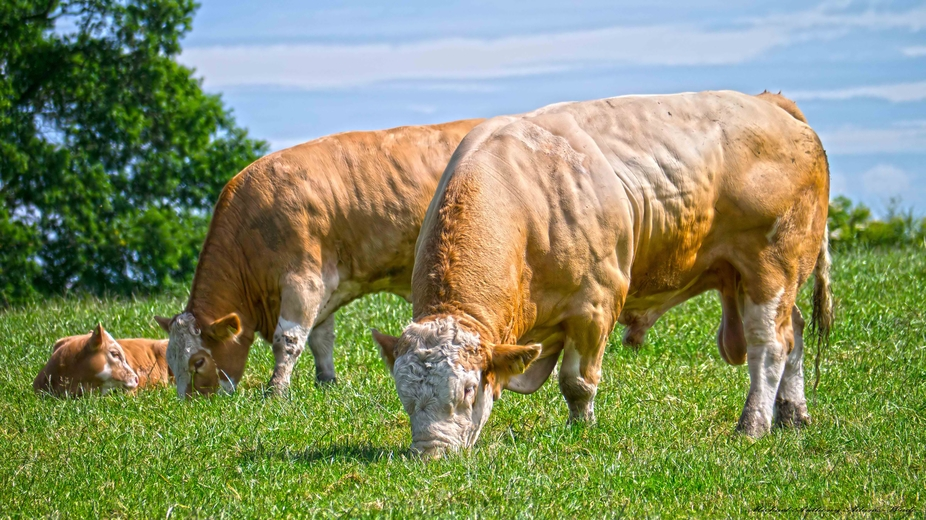 A Warm Summers Day In The UK, Mum Dad and Junior are out on the fresh green pastures of the Briti...