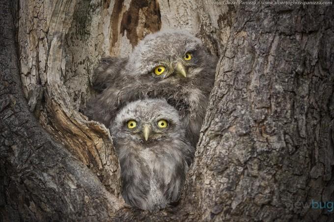 Civ & Civ by albertoghizzipanizza - Hiding Photo Contest