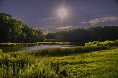 Pond light