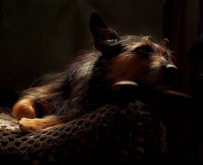The dog gazes lovingly at his master,an old man sat by his wood heater in a shed.The light from a small window falls softly on the the dog who never diverts his stare.