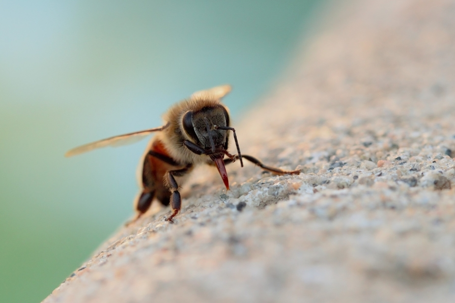 i saw a bee on the ground next to my pool while i was watering some plants and took a pic of this...