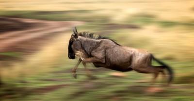 sprint...