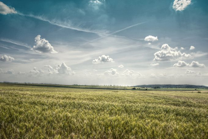 Corn Field by pemaphoto - Rural Vistas Photo Contest