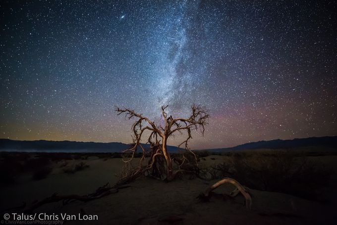 Death Tree by ChrisVanLoan - Visuals of Life Photo Contest