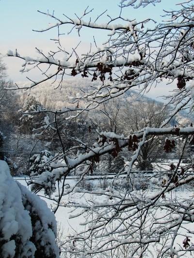 Branching Mountain