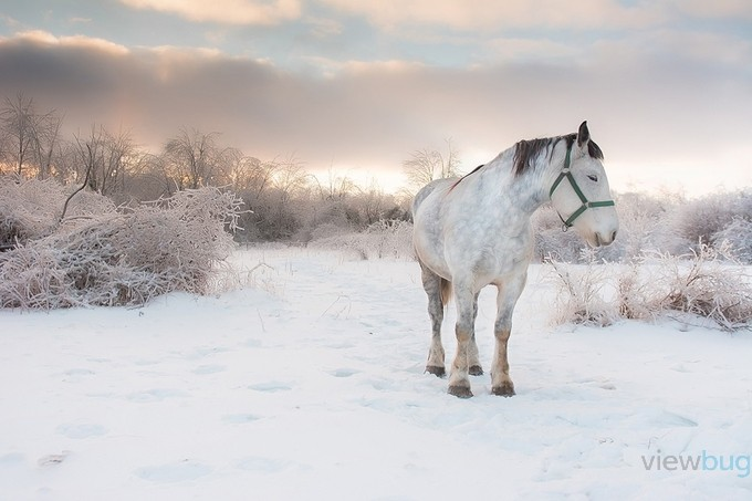 Snow Horse by maryannwamboldt - We Love The Winter Photo Contest