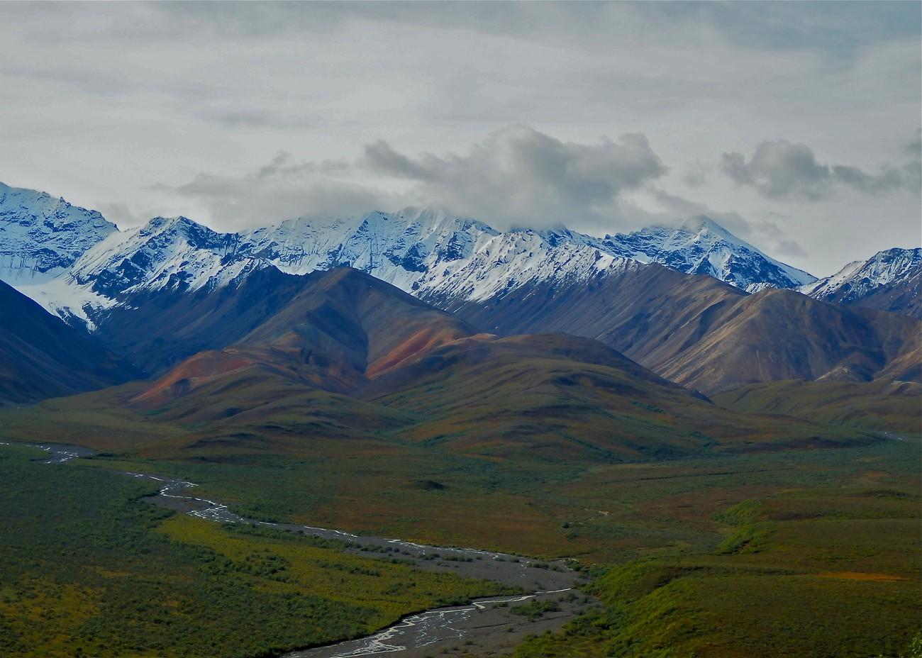 Denali National Park in August