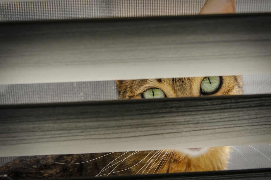 Our Little cat acting like she couldn\'t be seen.