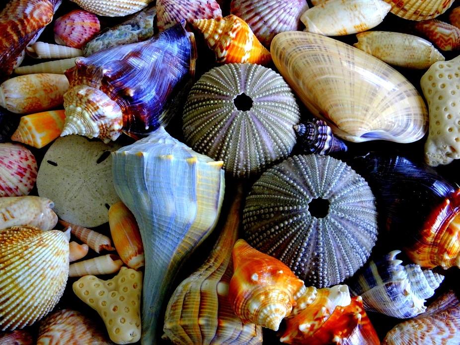 Treasures from Boca Grande