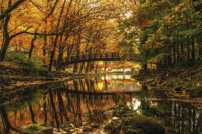 Autumn Reflections by aaronchoiphoto - Orange Is The Color Photo Contest