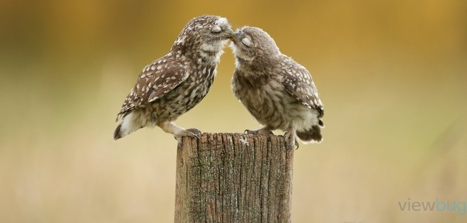 a little peck by bridgephotography - Only Owls Photo Contest
