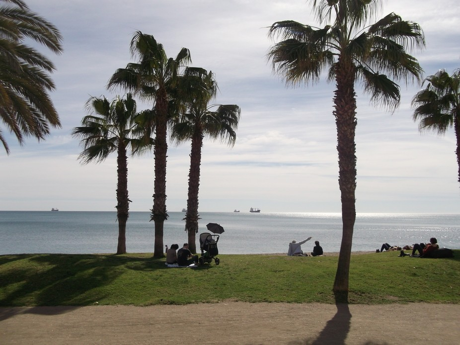 Palm Trees. - Malaga, Spain.