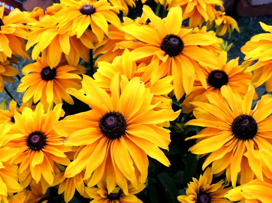 1000flowers