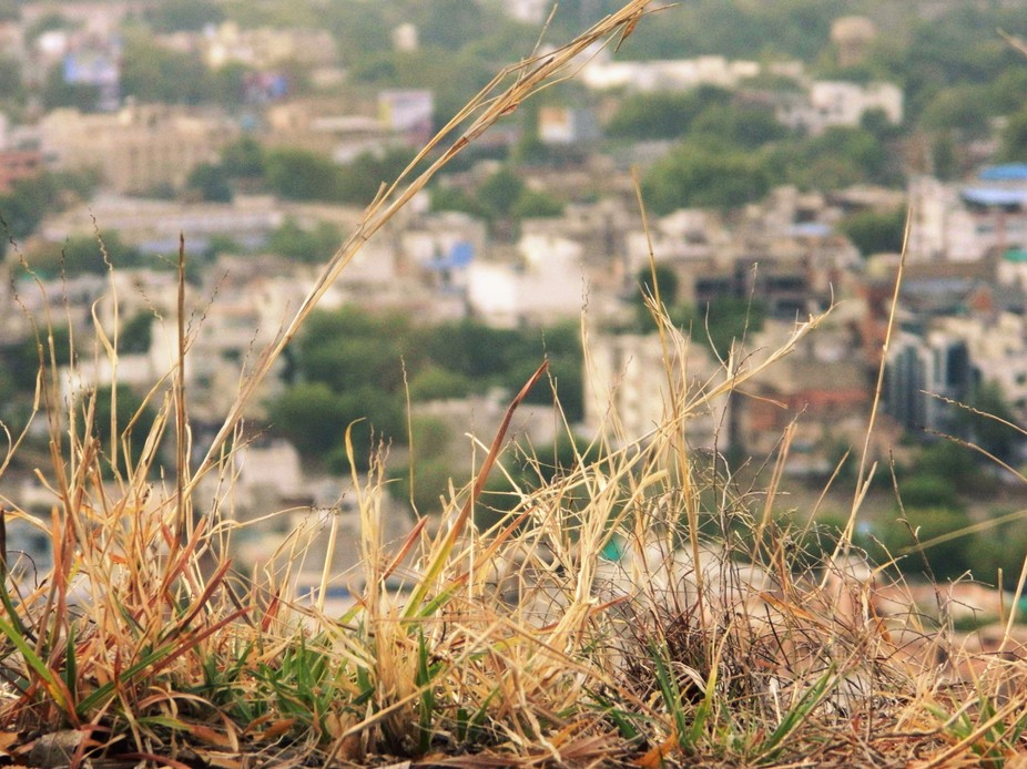 A photo taken from the gwalior fort.