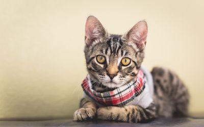 Sammy in a Sweater