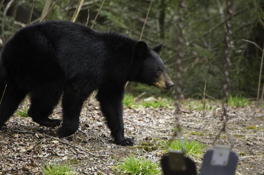 bear 3 (2)