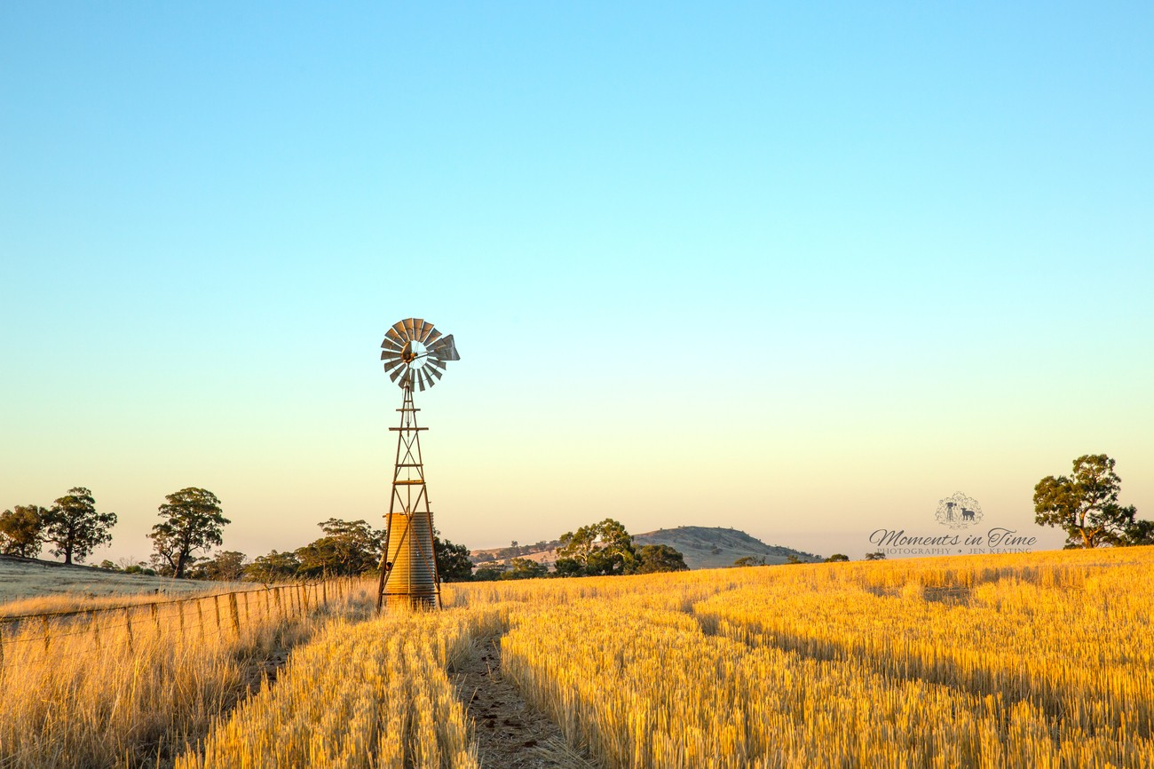 Just as the evening light sets in standing tall another Wonderful windmill.Beside the fence and above the stubble our eyes are led to it....