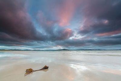 Lonesome Kelp