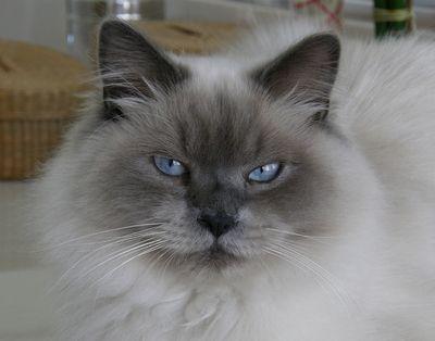 Frankie the Cat