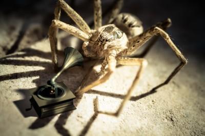 Arachnophonograph