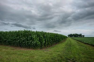 Amish Country Cornfield, Central Illinois