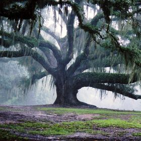 Taken at Avery Island, near New Iberia, LA