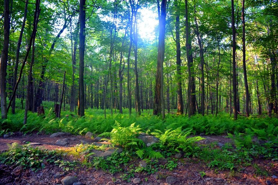 Appalachian Trail - 06-29-14  - Nikon D7100 -  f 11 - 1/1000