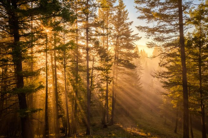 Morning Splendor by scottwilson - Playing With Light Photo Contest